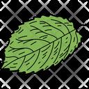 Elm Leaf Leaf Foliage Icon