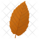 Elm Leaf Icon