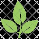 Elm Leaves Icon
