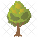 Elm Tree Icon
