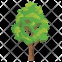Elm Tree Icon