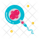 Embryo Maternity Baby Icon