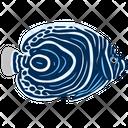 Emperor Angelfish Sea Creature Animal Icon