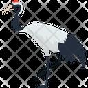 Emu Ostrich Animal Icon
