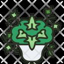 English Ivy Plant Garden Icon