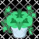 English Ivy Icon