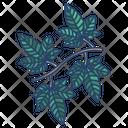 English Ivy Leaf Icon