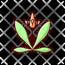 English Plantain Plantain Plant Icon