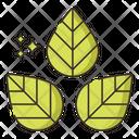 Eucalyptol Icon