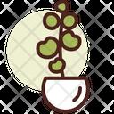 Eucalyptus Icon