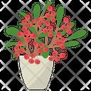 Euphorbia Milii Plant Icon