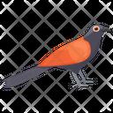 Eurasian Finch Icon
