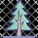 Evergreen Tree Fir Tree Larch Tree Icon