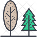 Poplar Tree Cypress Icon