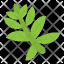 Ewedu Leaf Icon