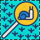 Explore Nature Snail Icon