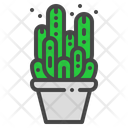 Fairy castle cactus Icon