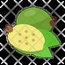 Feijoa Icon
