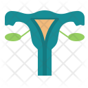Female Reproduction Uterus Icon