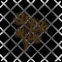 Fennel Leaf Flower Icon