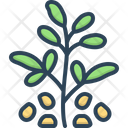 Fenugreek Seed Trigonella Icon