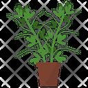 Fenugreek Potted Plant Icon
