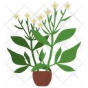 Feverfew Potted Plant Icon