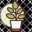 Ficus Icon