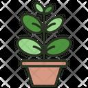 Ficus Elastica Icon
