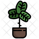 Fiddle Fig Icon