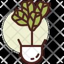 Leaf Fig Icon
