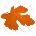 Field Maple Icon