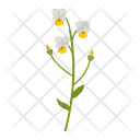 Field violet Icon