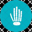 Finger Skeleton Skull Icon