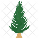 Poplar Fir Pine Icon
