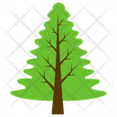 Poplar Tree Fir Icon