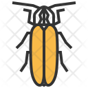 Firefly Insect Bug Icon