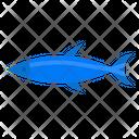 Fish Zoology Wild Icon