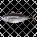 Dead Thunnus Fish Icon