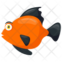 Platy Freshwater Poeciliidae Icon