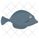 Freshwater Fish Pet Fish Fish Icon