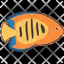 Flame Angelfish Icon