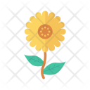 Flower Camomile Garden Icon