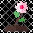 Spring Flower Blossom Icon