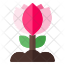Flower Plant Spring Icon