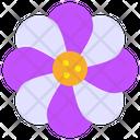 Daisy Flower Blossom Icon