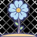 Beauty Flower Shamrock Icon