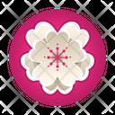 Sakura Festival Flower Blossom Icon