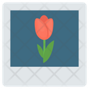 Flower Image Icon