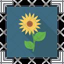 Flower Photo Icon